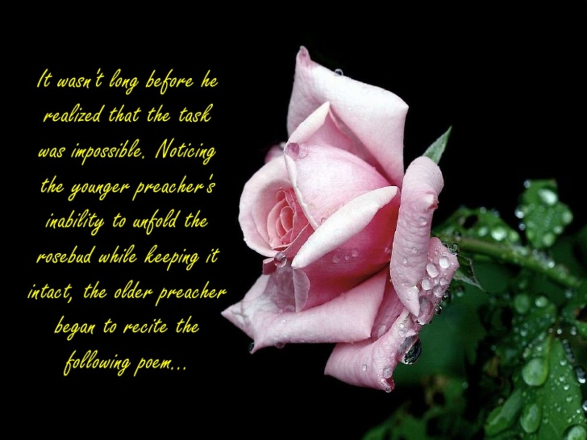 I Wish  to be a Lover, With You as my Rose. Sunday's Inspiration 19, a Lofty Offering to Rajan Jolly