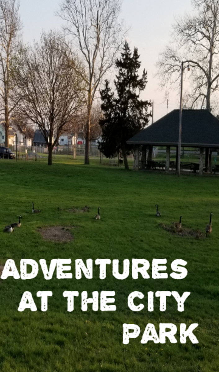 Adventures at the City Park