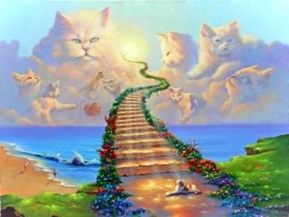Cross Over the Rainbow Bridge My Darling One...