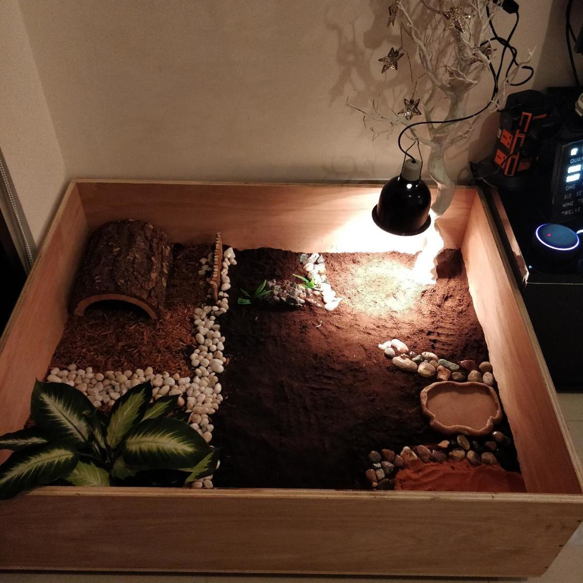 The enclosure for my Greek tortoise.