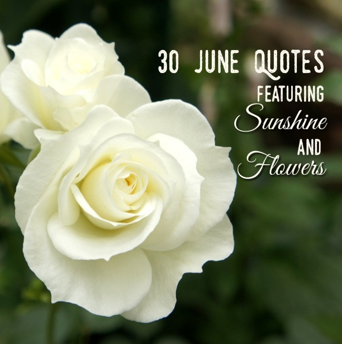 30 June Quotes Featuring Sunshine and Flowers