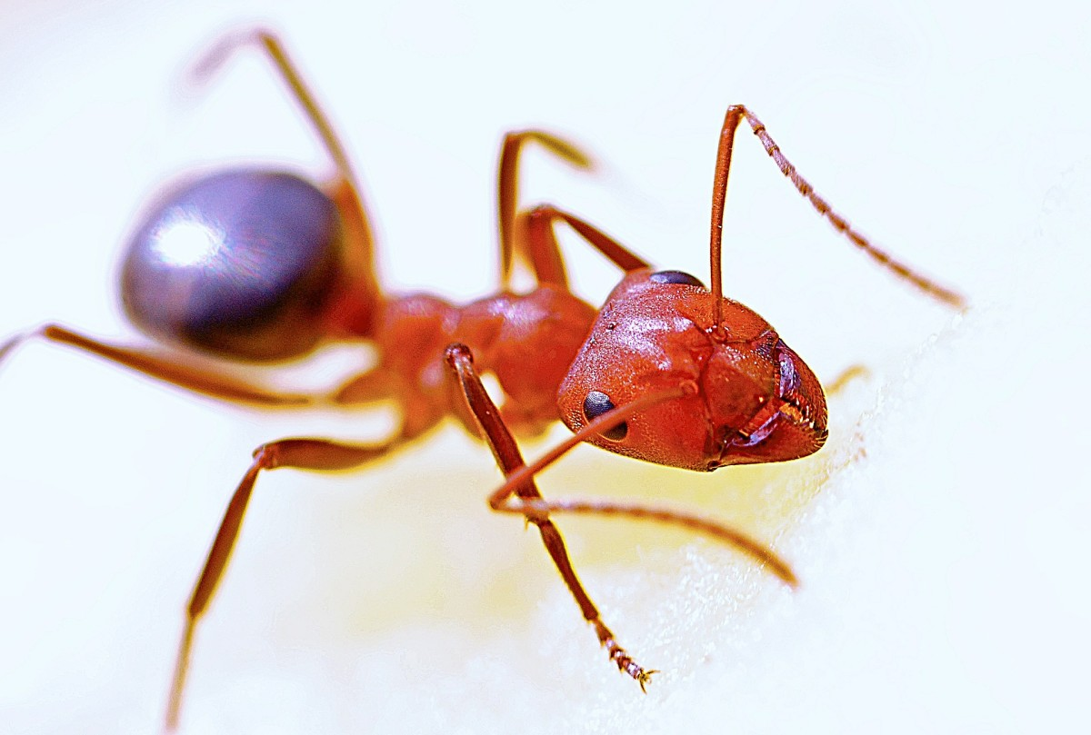 25-insects-name-in-hindi-and-english