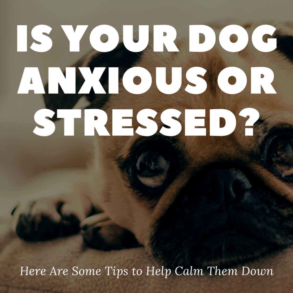 Calming your pet can be easy with a few simple lifestyle adjustments.
