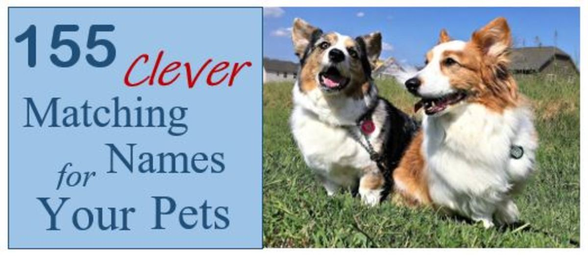 155 Clever Matching Names for Your Pets