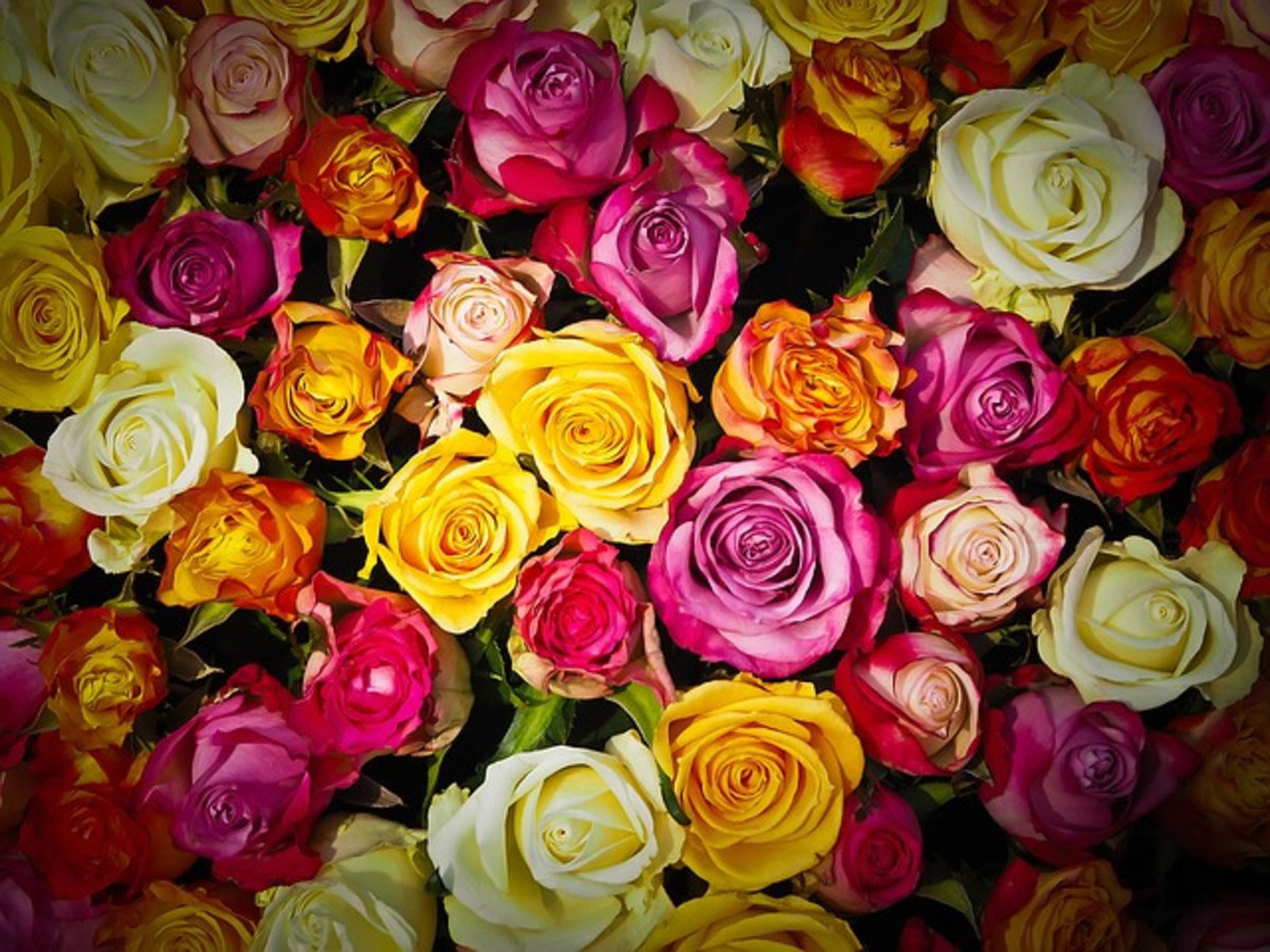 What's your rose language?
