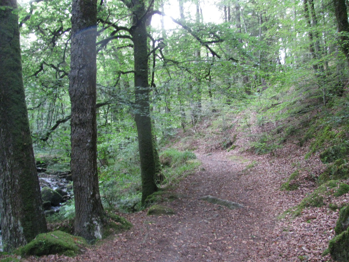 Paths Through Nature and Through Lives, Real and Spiritual Footprints, Including the Path of Covid-19