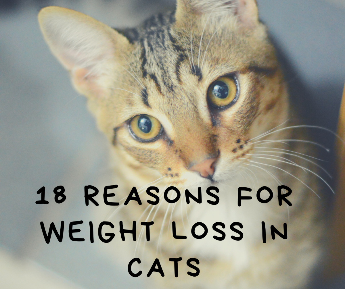 18 Reasons for Weight Loss in Cats