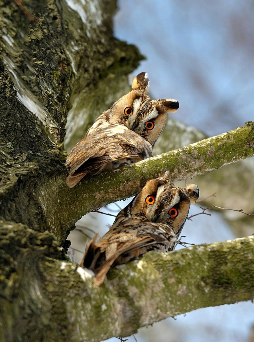 A pair of wise owls