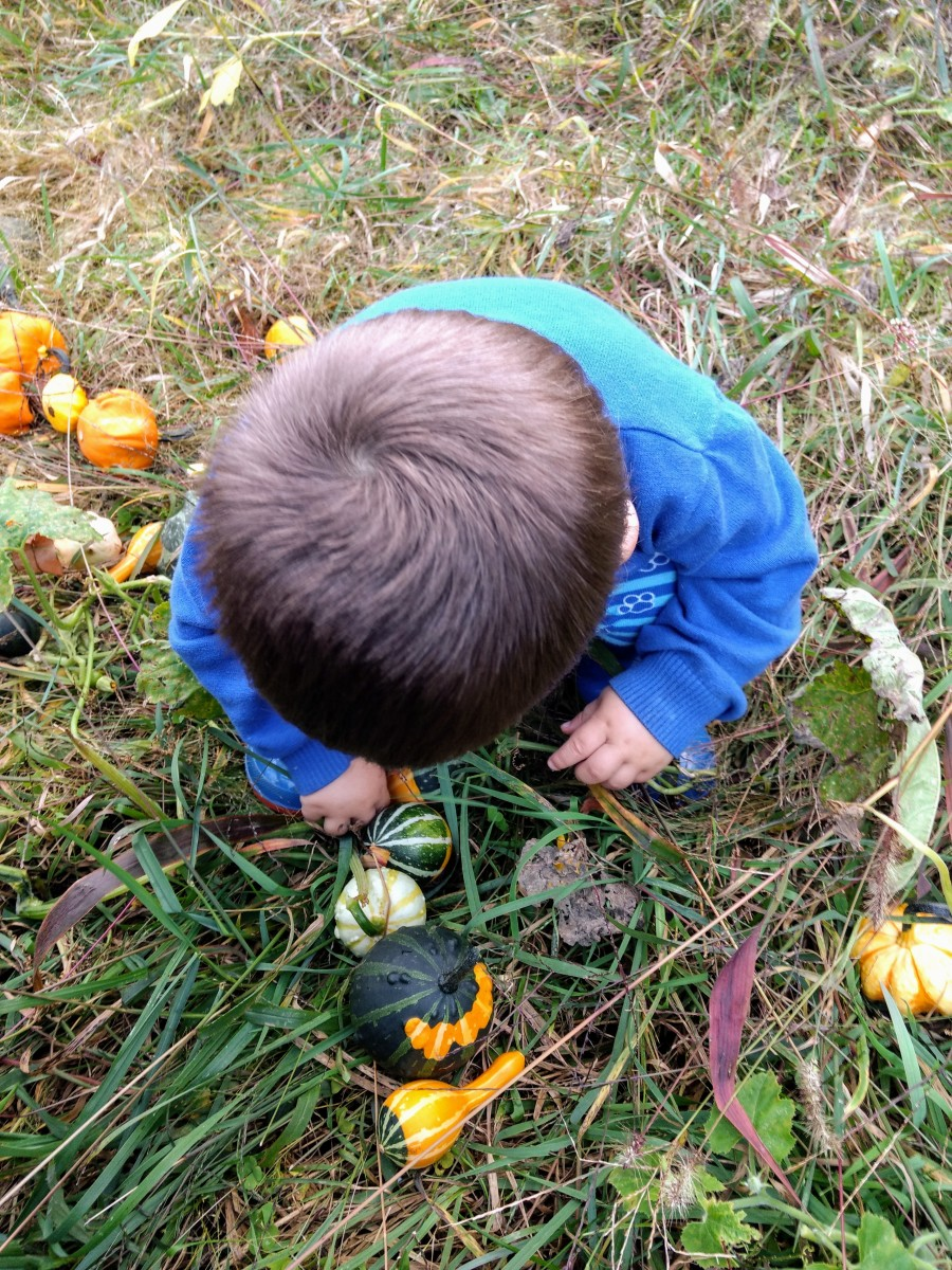 One year, we grew gourds to give out instead of candy on Halloween.