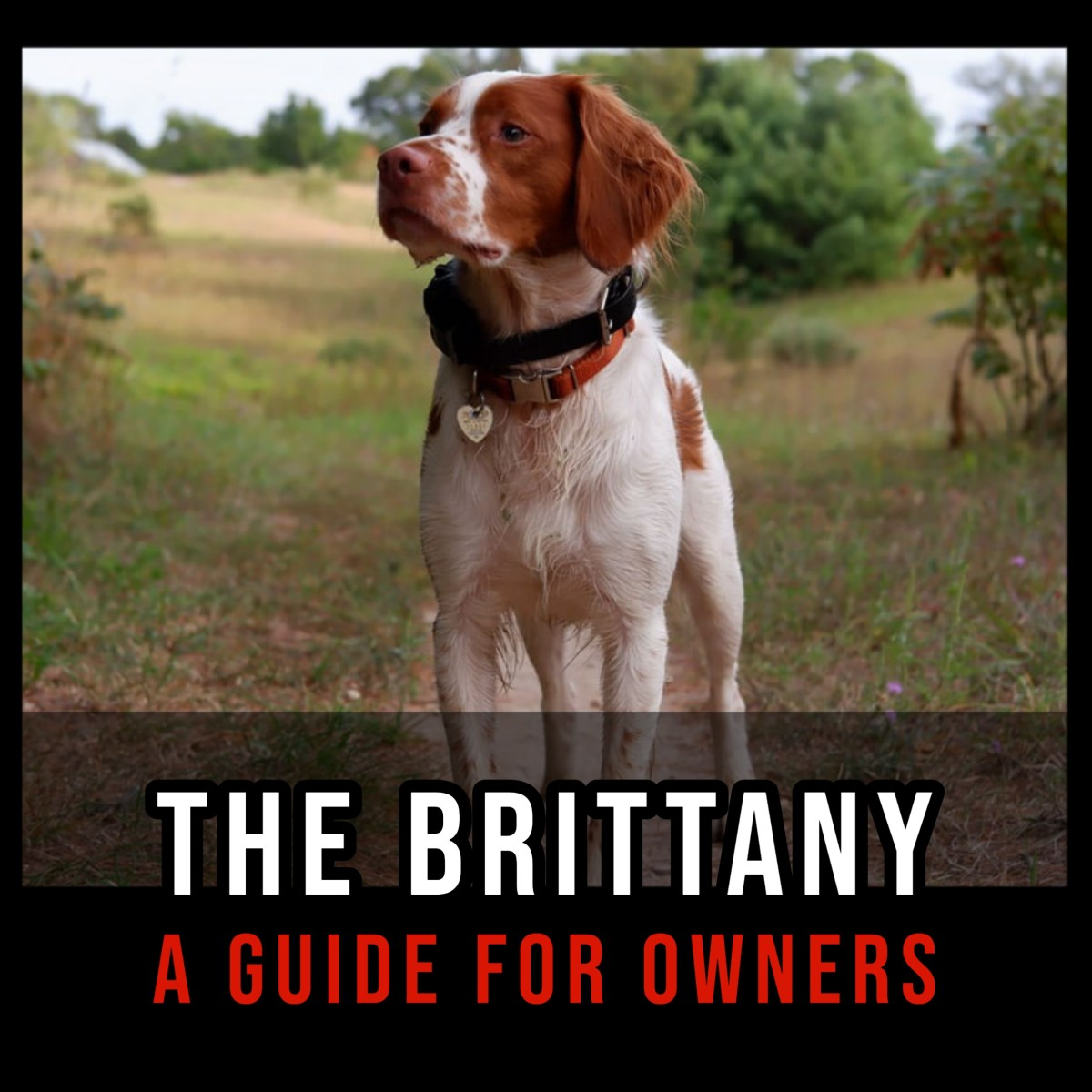 The Brittany: A Guide for Owners.