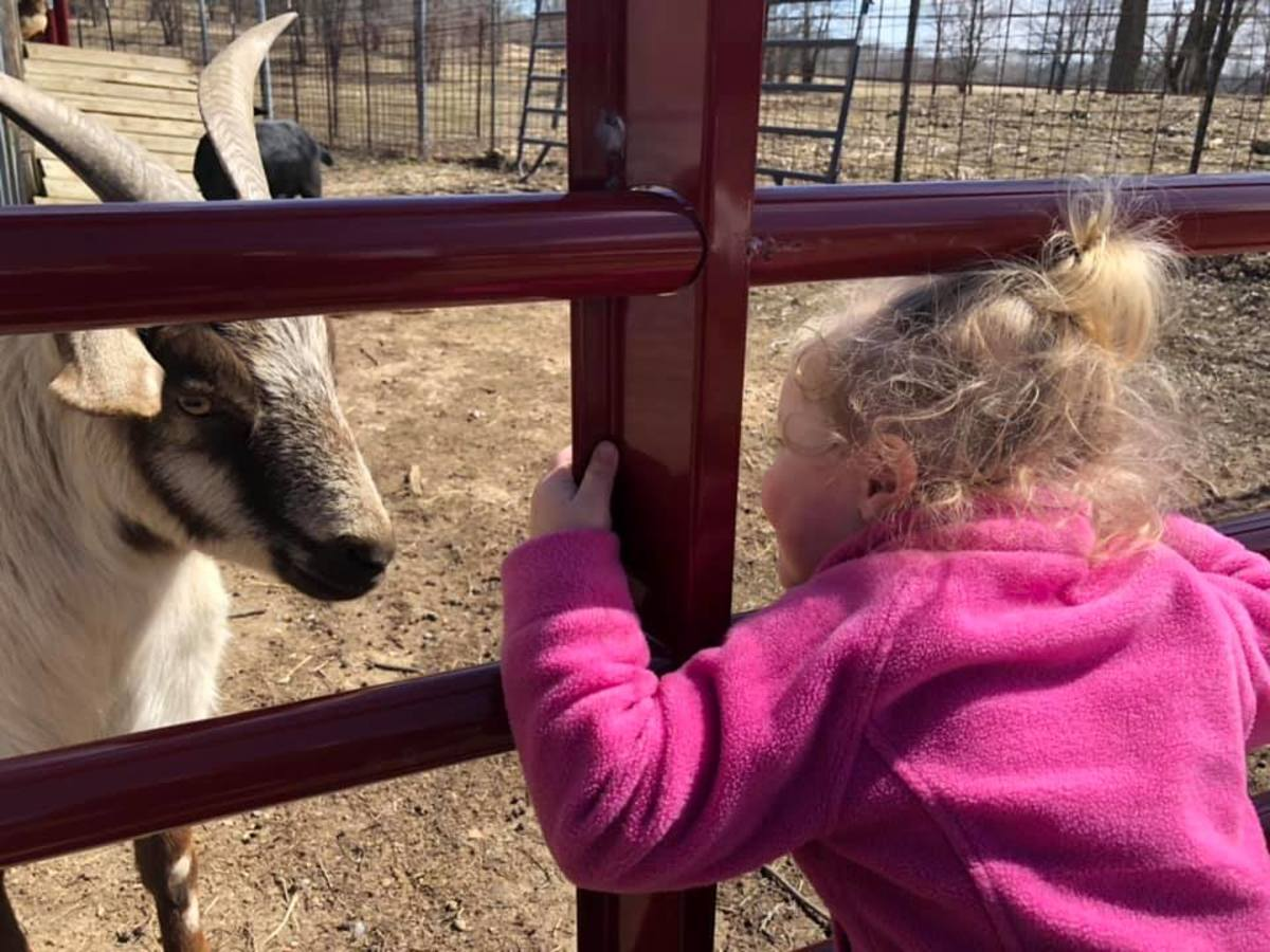 Children love to go to my daughter's farm to see the goats.