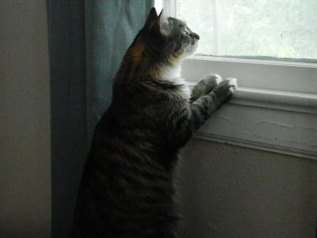 My prayer kitty. Just because...