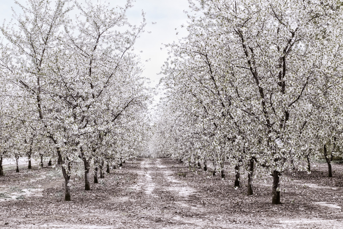 Apple Orchard in Michigan