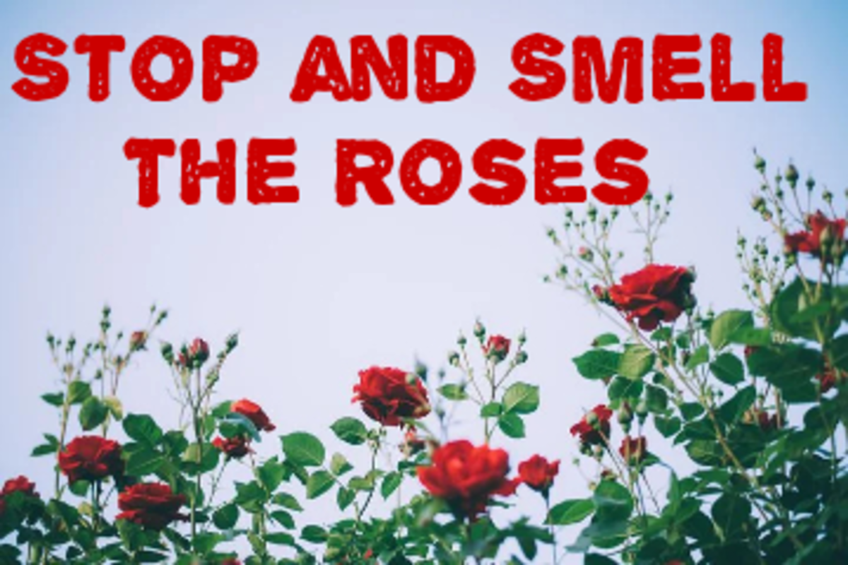 Poem: Stop and Smell The Roses