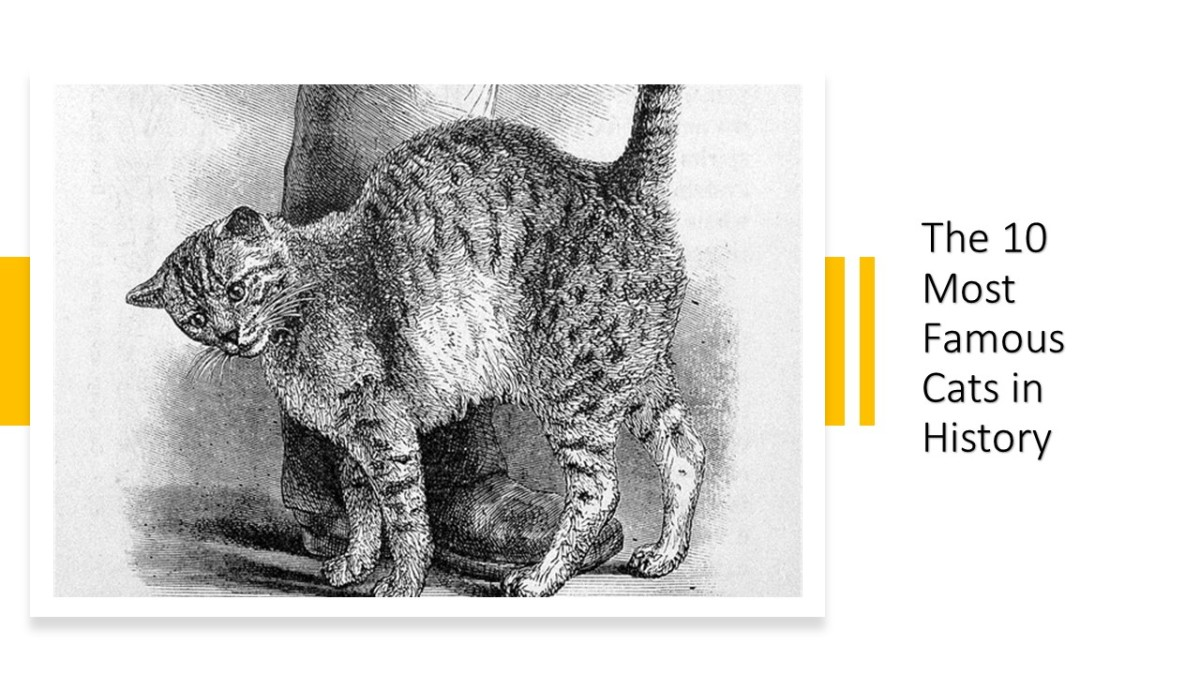 10 of the Most Famous Cats in History
