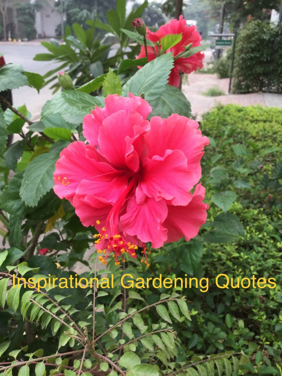 20 Interesting And Inspiring Gardening Quotes