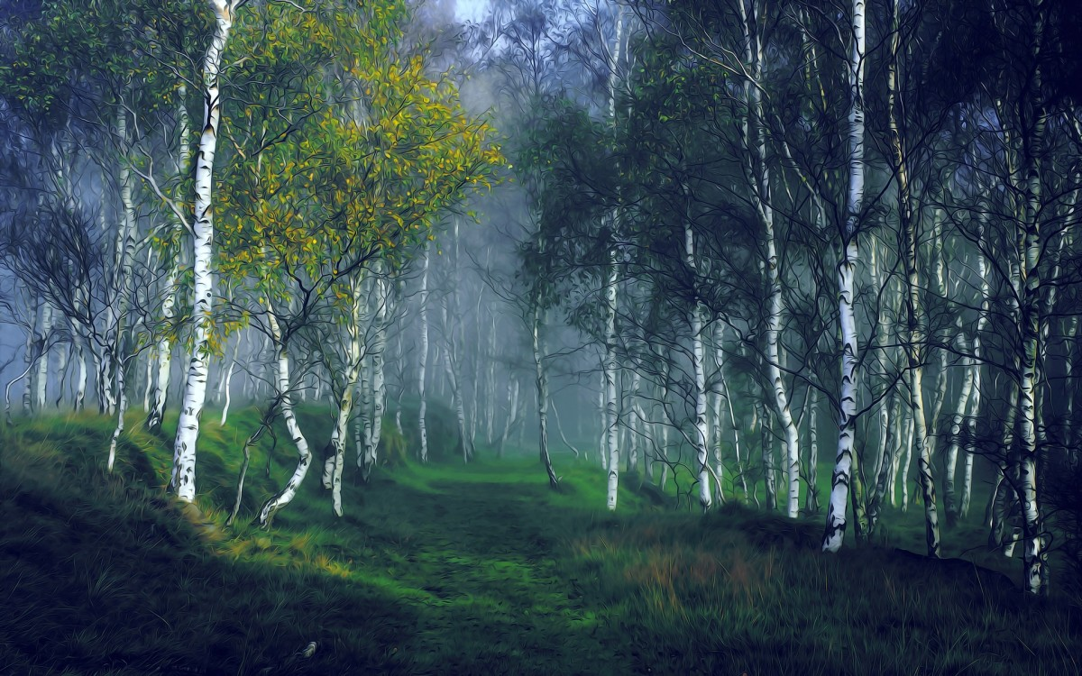 Birch Tree - A New Beginning
