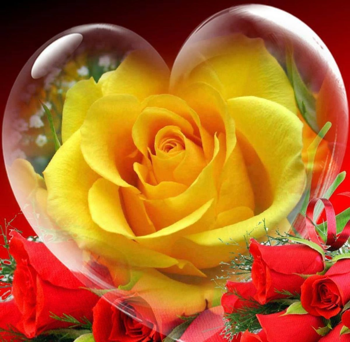 The Heart and the Rose. Friday's Inspiration 9, a Soulful Offering to the Writer Ann Carr