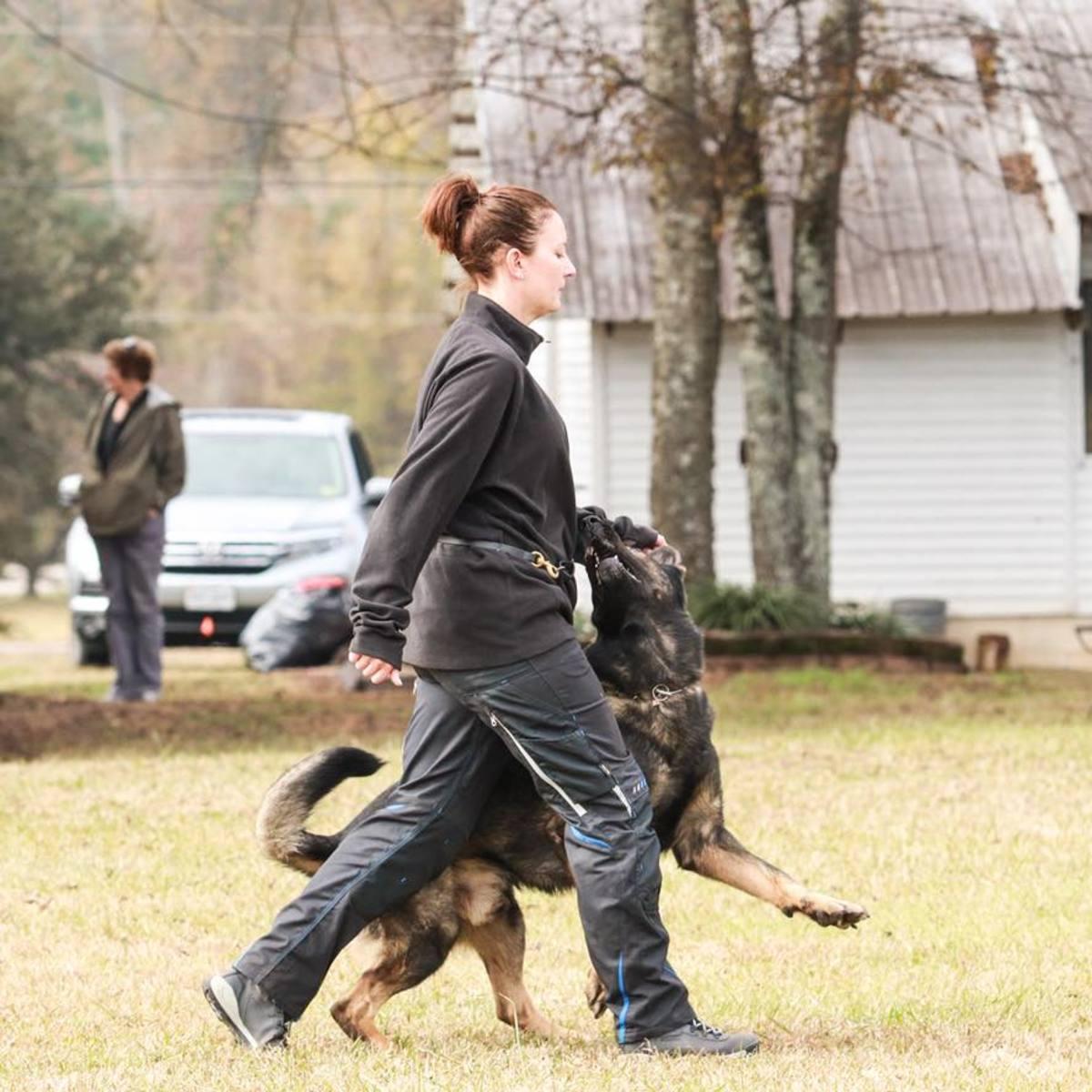 Schutzhund: Dog Sport in Europe and USA