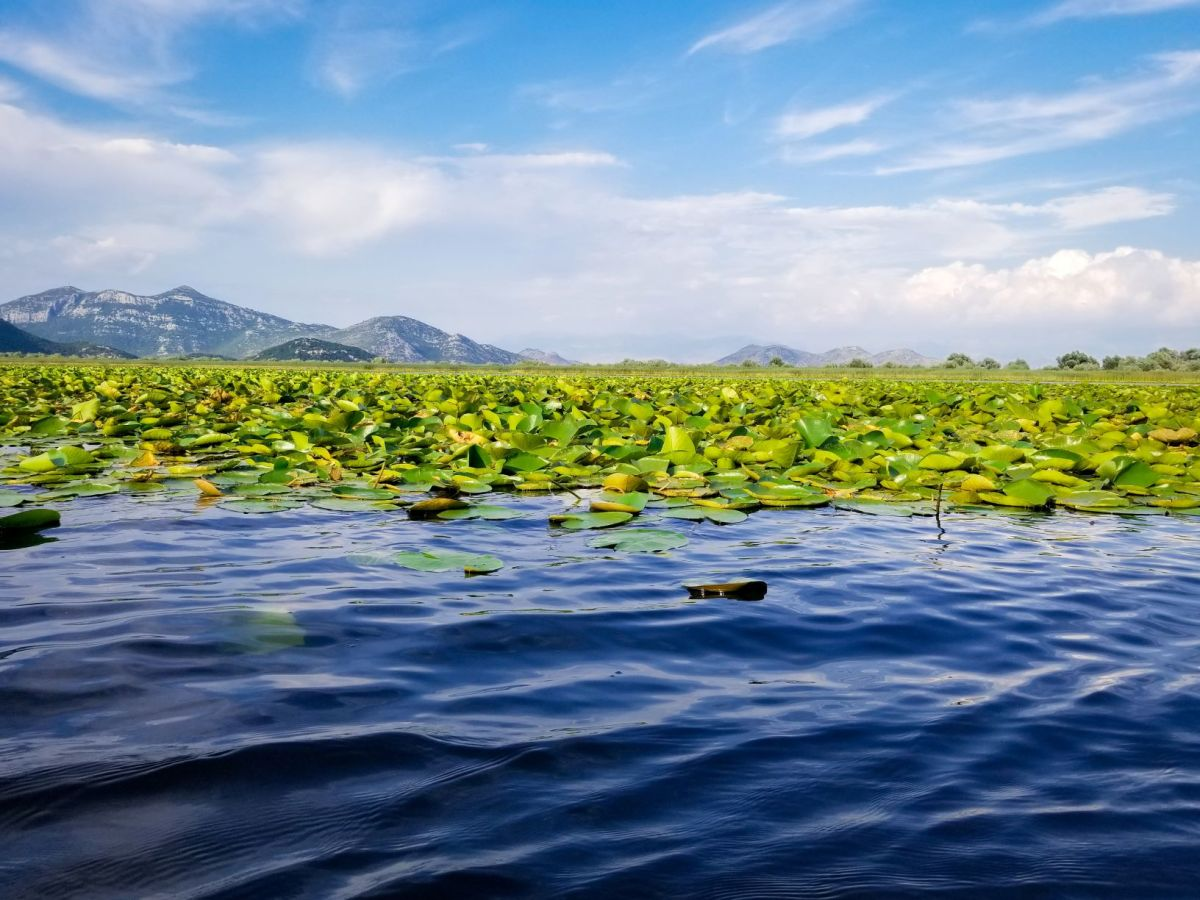 A Lake of Two Cities: Skadar and Shkodër