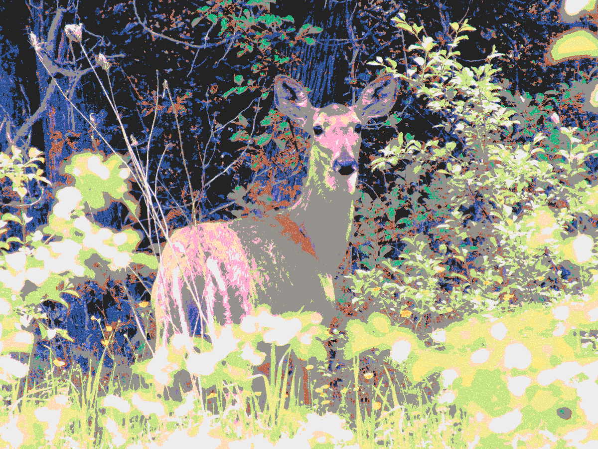 A deer photo with crayon colors .