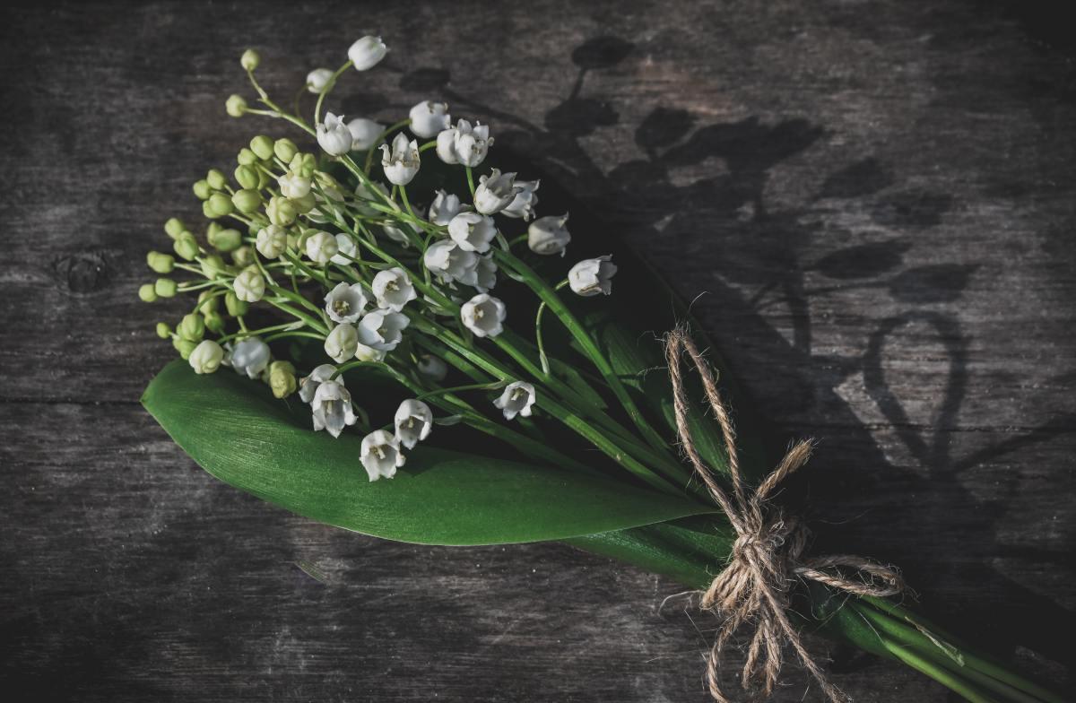 Gentle Flower of My Birth