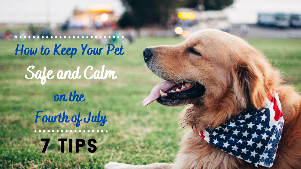 Help your pet feel secure and relaxed on the Fourth of July.