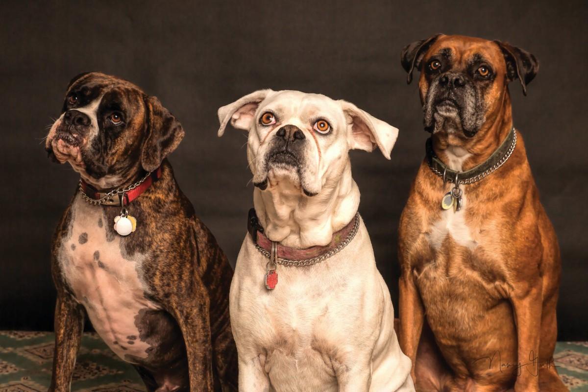 dogsbreedsforkids