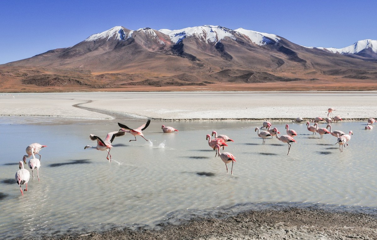 5 Unbelievable Things You Can Do in Bolivia