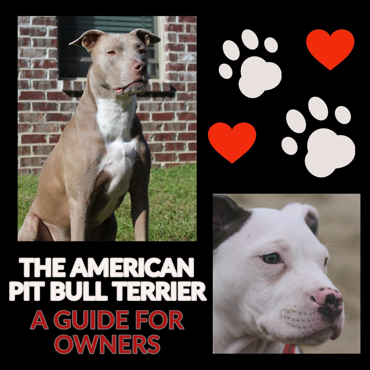 The American Pit Bull Terrier: A Guide for Owners.