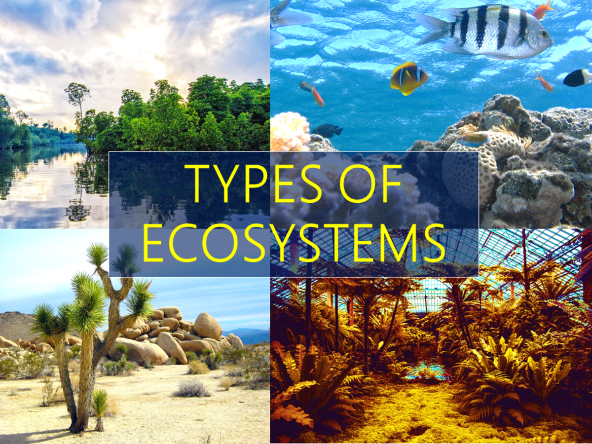 3 Different Types of Ecosystems