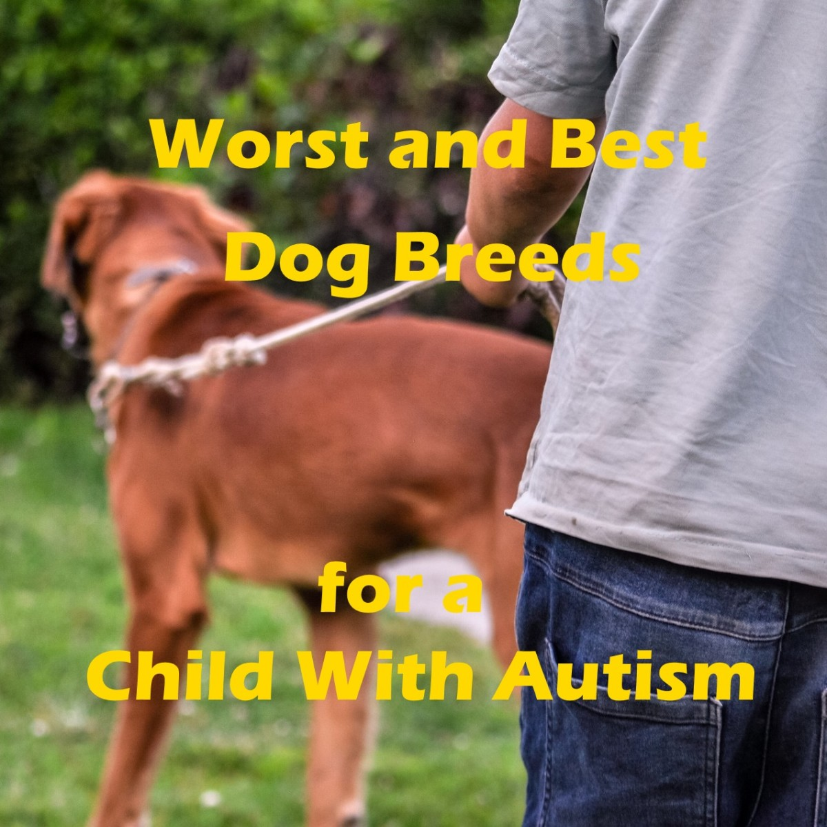 Best and worst dog breeds for a child with autism.
