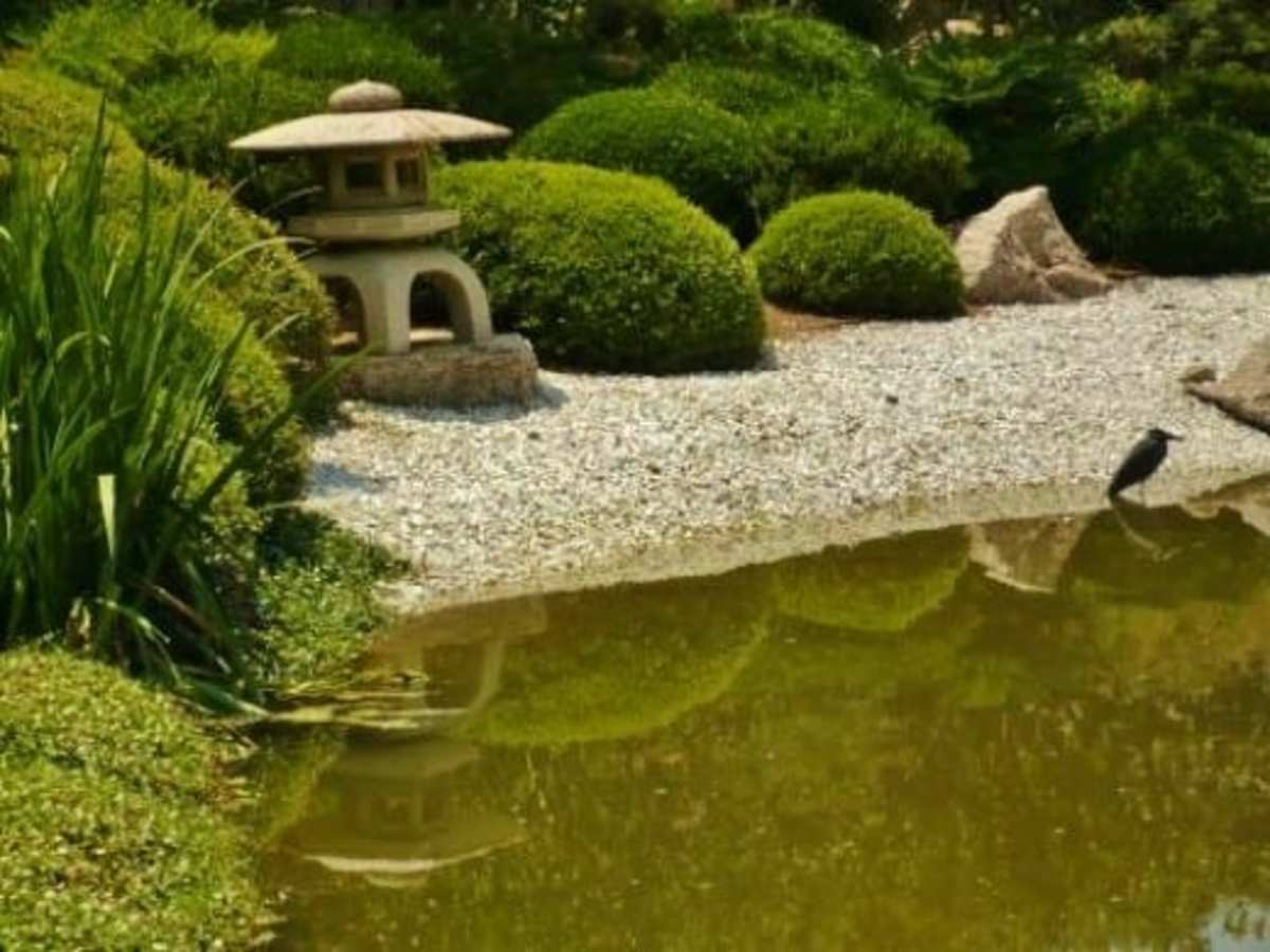 Japanese Tea Garden in Houston, Texas: Serenity in Hermann Park