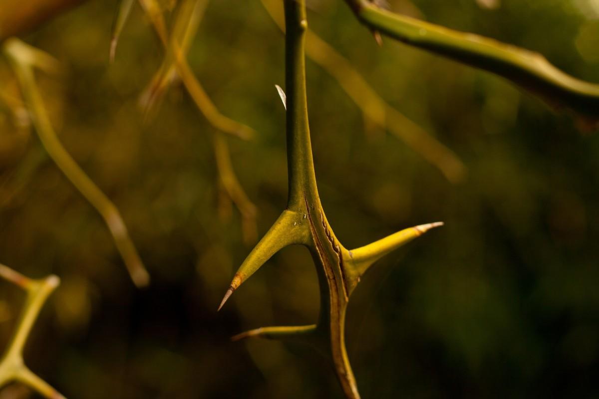 The Thistle's Flower: Short, Short Fiction
