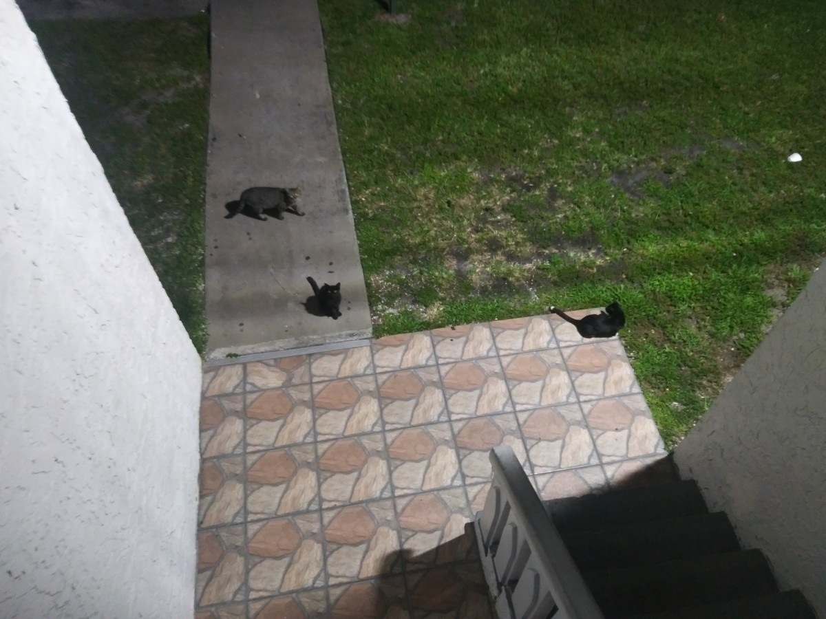 5 Reasons Not to Feed Feral Cats at Your Apartment
