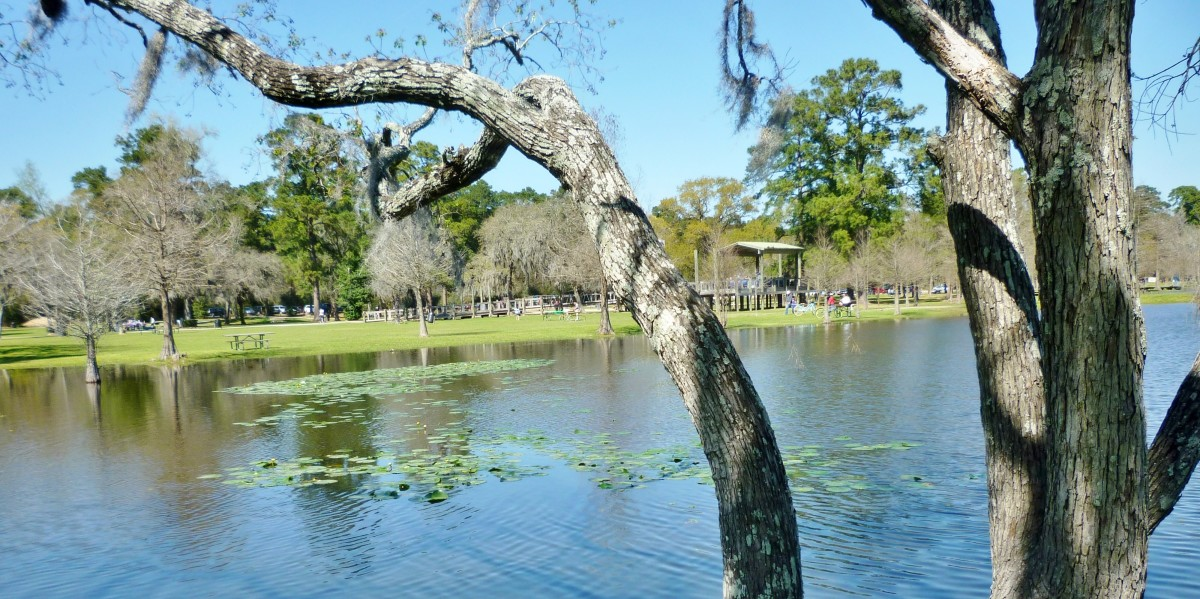 Burroughs Park: A Fabulous 320-Acre Park in Tomball, Texas