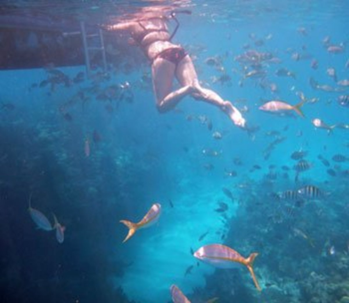 Best Places to Snorkel Coral Reefs in Florida