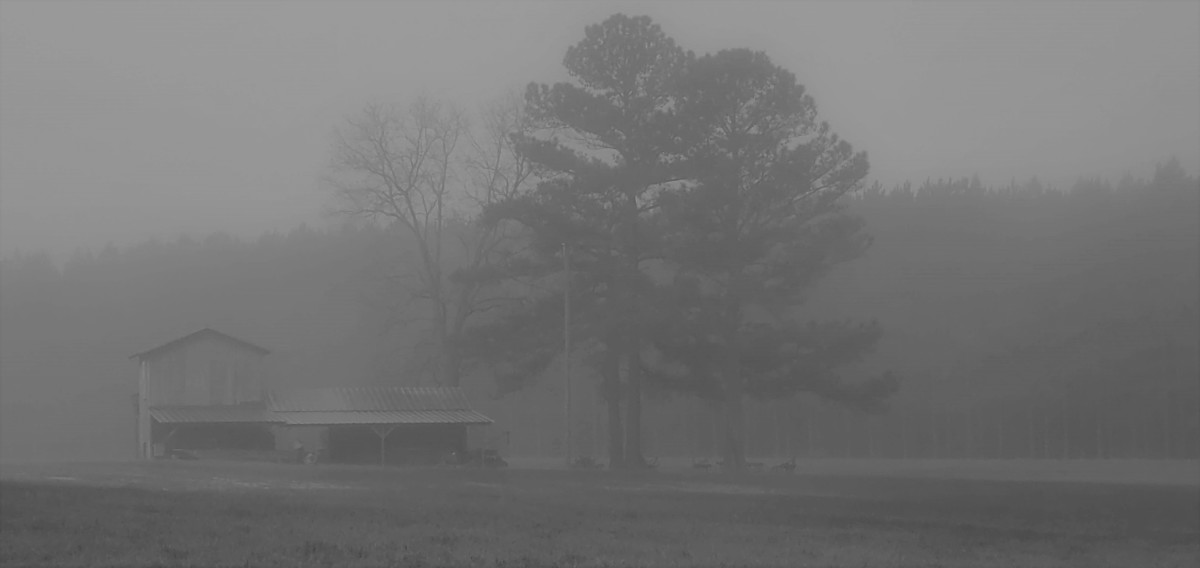 Life in a Fog