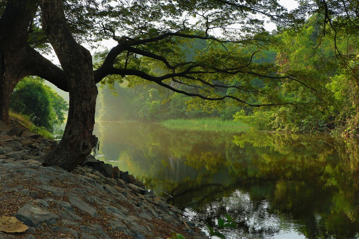 The River, Image by Free-Photos from Pixabay