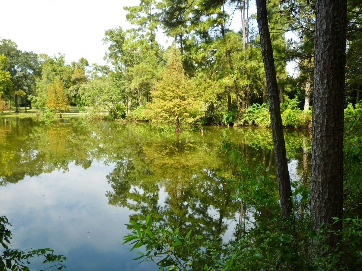 Natural Beauty in Abundance at Meyer Park in Spring, Texas