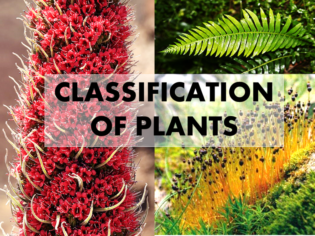 Types of Plants: What Are the 4 Types of Plants?