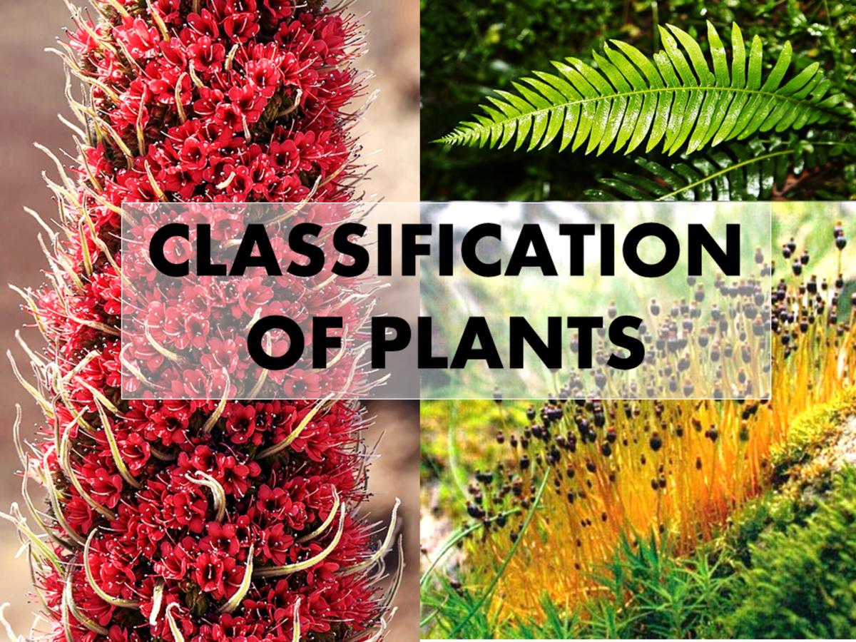 4 Types of Plants (Kingdom Plantae)