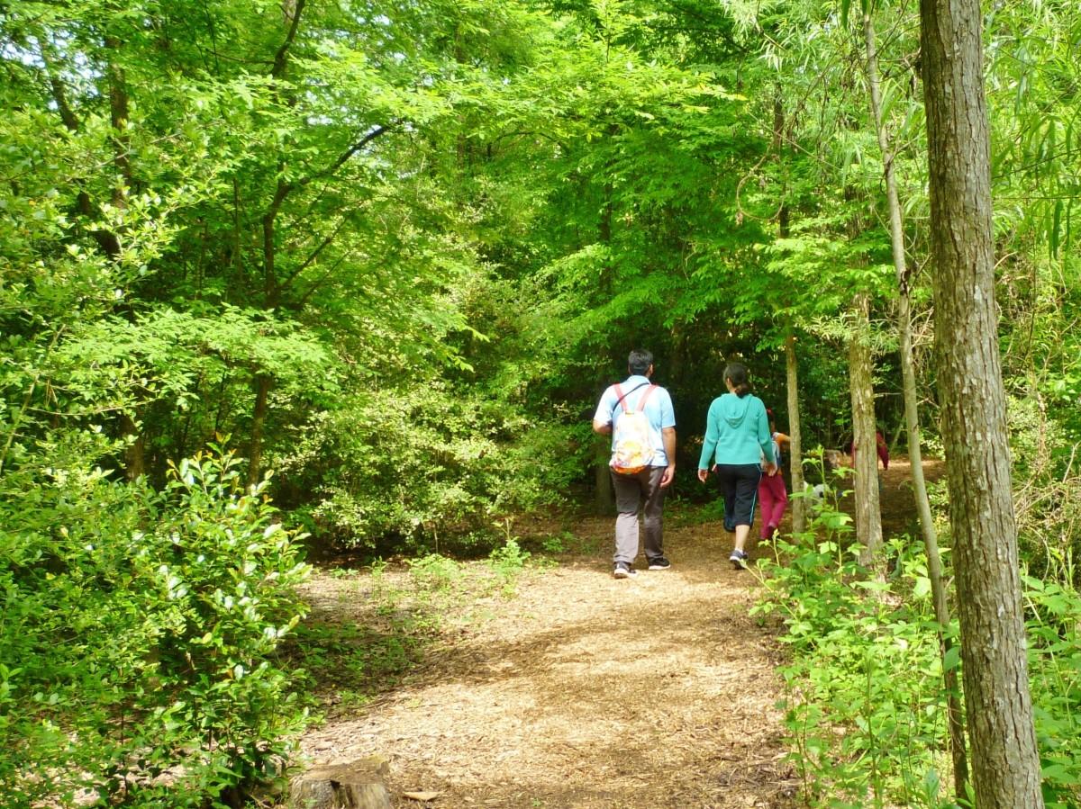Strolling through the Houston Arboretum and Nature Center.