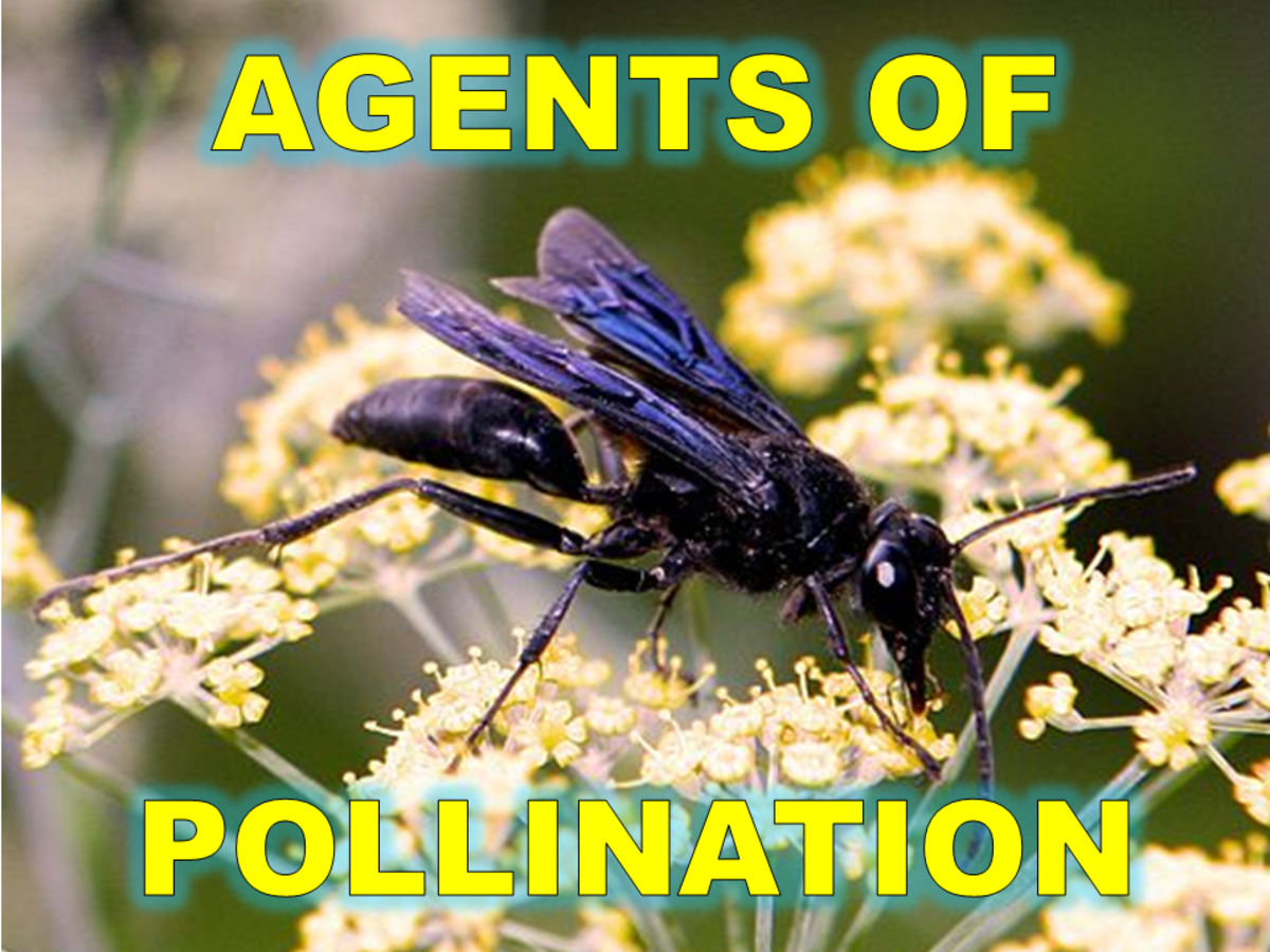 Different Agents of Pollination