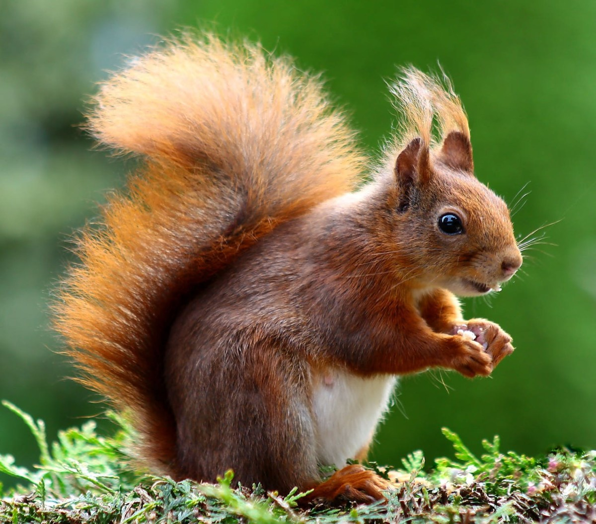 Squirrels: Nature's Mystery