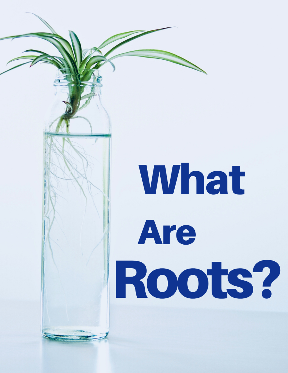 How Do Roots Work? Functions, Structure, and Human Uses