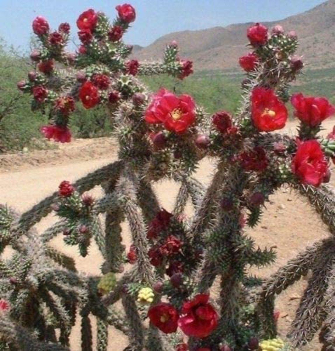 Cacti Haiku