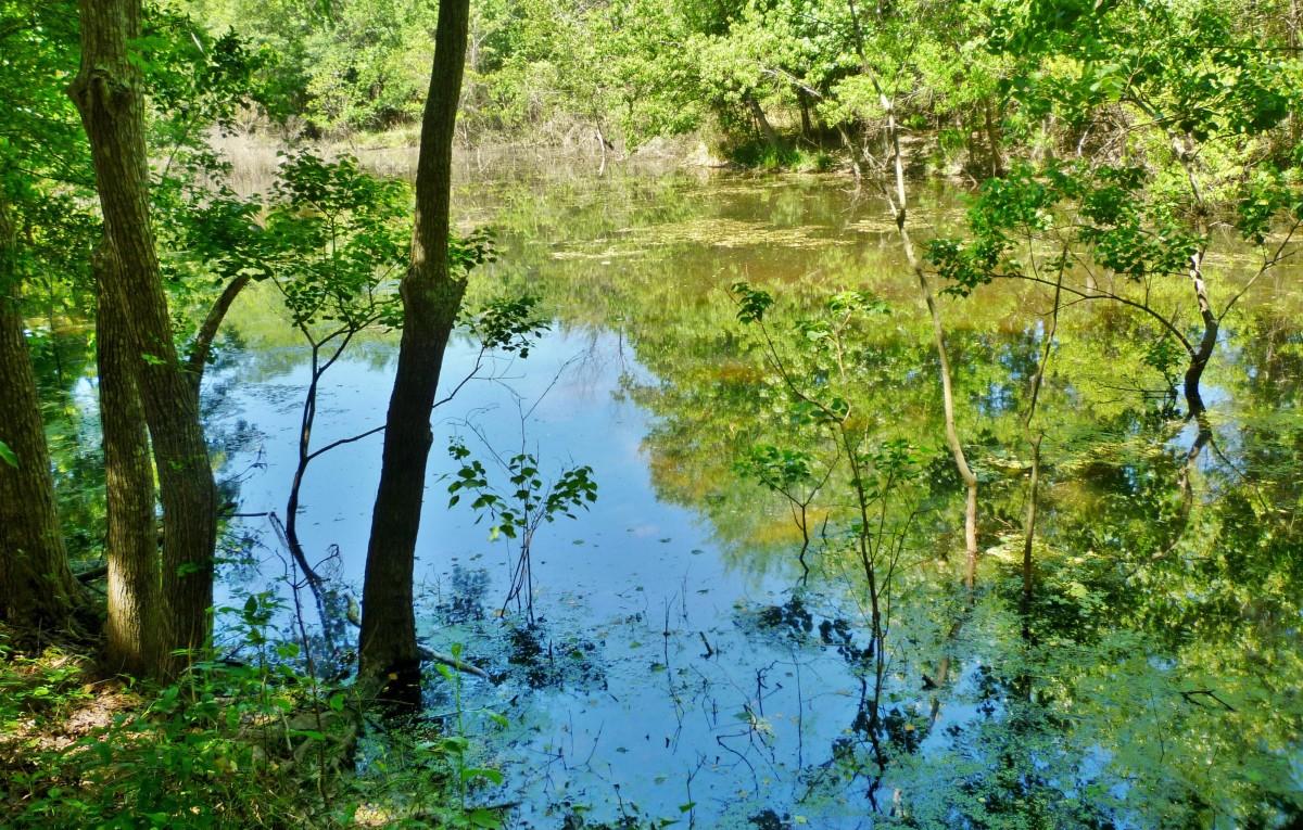 Little Cypress Creek Preserve: Wildlife Habitat in Cypress, TX