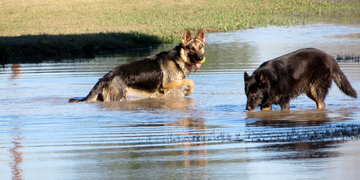 Congressman Bill Archer Park: Houston Dog Park Heaven!