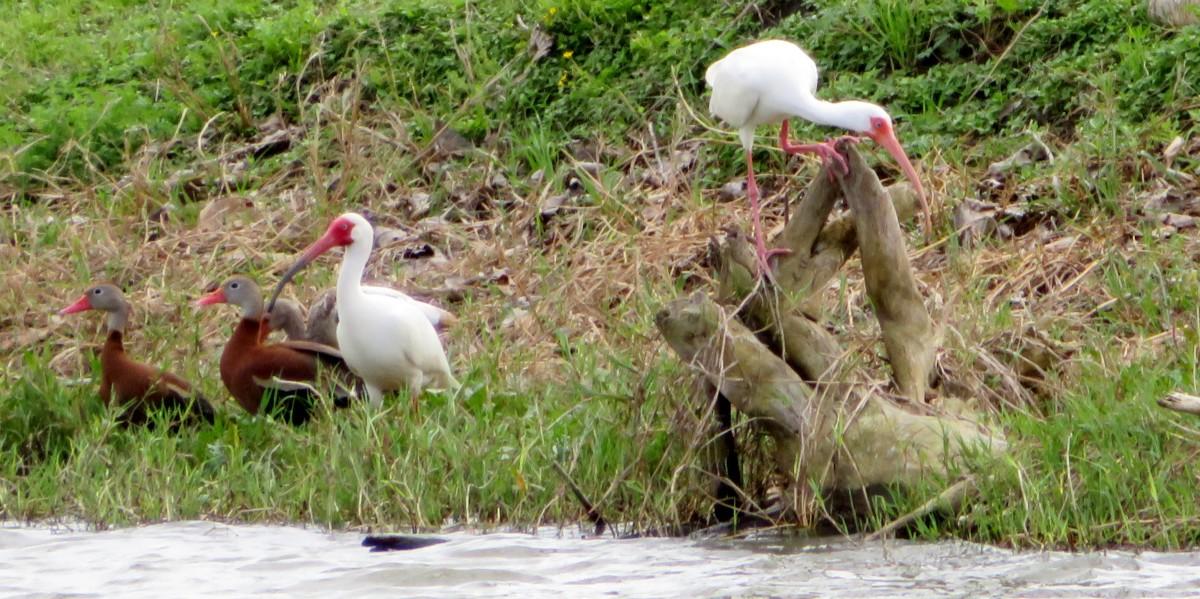 Seabourne Creek Nature Park